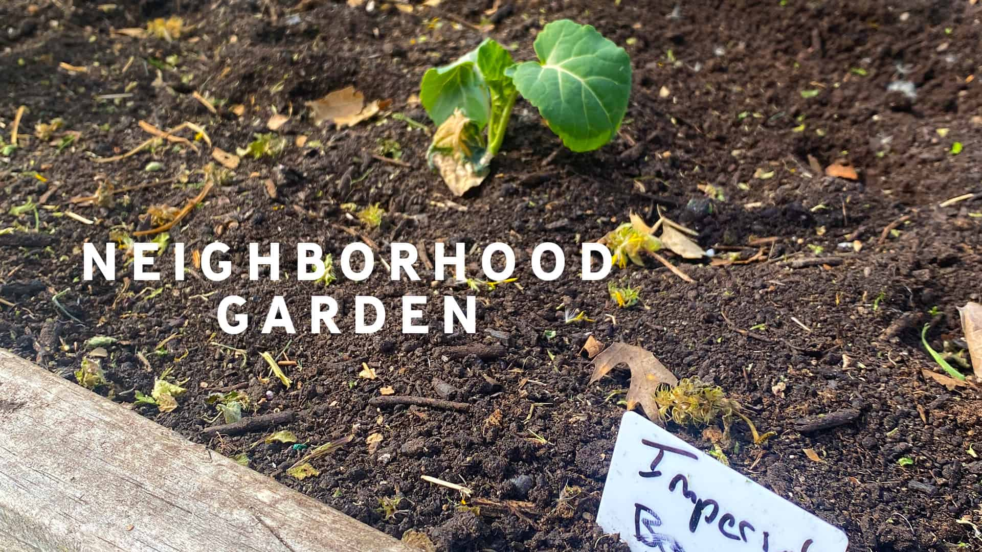 Promotional Graphic for The E. Stanford Community Garden